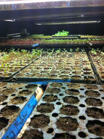 Growing tables